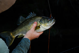 hooked bass