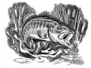 Illustration_drawing_of_largemouth_bass_micropterus_salmoides_in_cattails