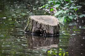 Stumps, dock pilings, rocks all make great cover for ambush bass